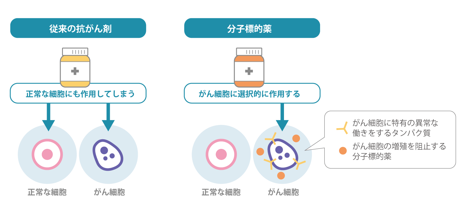 従来の抗がん剤と分子標的薬のち外